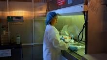 Állat orvosok film