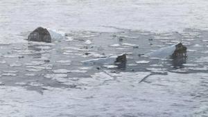 Zuhanás a Potomac folyóba fotó