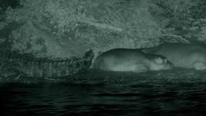 I predatori della notte foto