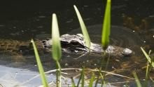 Everglades Residents program