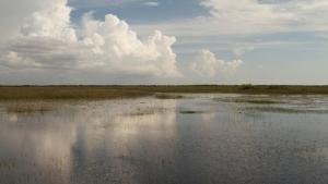 Everglades-mocsár fotó