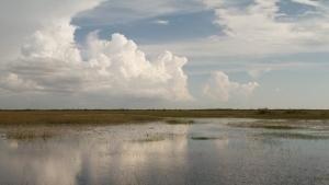 Everglades photo