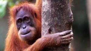 Tiere ausser Rand und Band Foto