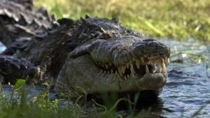 American Crocs photo