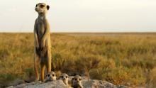 Kalahari Desert show