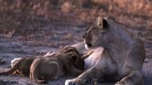حيوانات قاتلة بلا رحمة برنامج