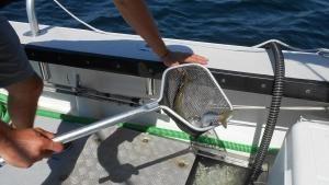 Rods, Reels and Tuna photo