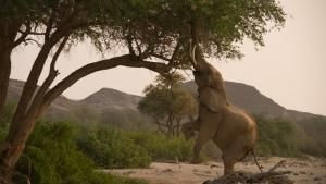 Nat Geo Wild has greenlit four new specials as part of its 'Destination Wild'...