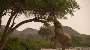 Elefanti & giraffe foto
