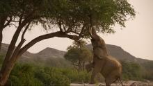 Elefanti & giraffe programma