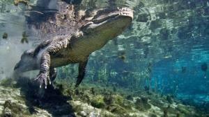 Au royaume des alligators, episode 1 photo