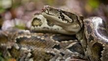 Floride, la côte des crocodiles, episode 2 Voir la fiche programme
