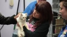 Lady With 700 Cats show