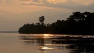 الحياة البرية في الكونغو صورة