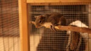 Animal Rescuers photo