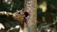 Squirrels in Action Program