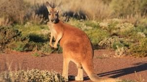أستراليا البريّة صورة