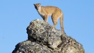 La fauna più Wild foto