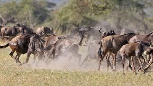 Wild Fighters photo