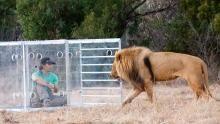 Un coraggio da leoni programma