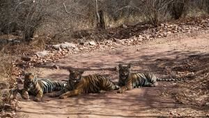 La terra della tigre foto