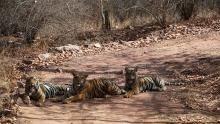 La terra della tigre programma