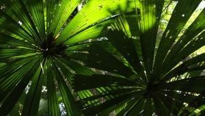 Jurassic Jungle photo