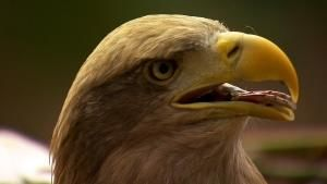Majestic Eagles photo