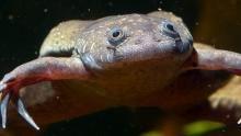 Amazing Amphibians show
