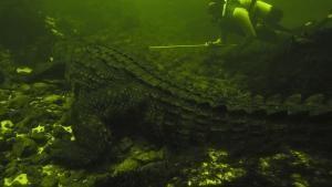 Croc Labyrinth photo