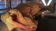 Inside the T. rex recreation show