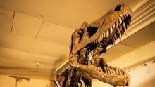 Mighty Tyrannosaurus show