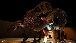Mighty Tyrannosaurus photo
