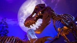 T. rex Fossils photo