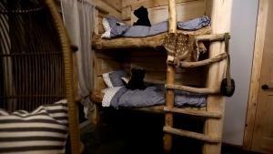 Majestic Cabin photo