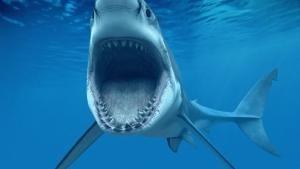 I predatori più temibili del mare foto