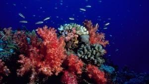 Underwater Paradise photo