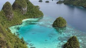 إندونيسيا البرية صورة