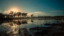 Gorongosa National Park show