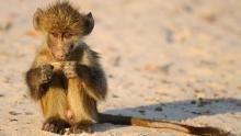 Baby Animals Serie