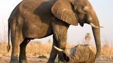 The Magnificent Elephant Program