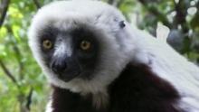 The Lemurs Program
