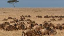 Wild 24: Africa's Savananh show