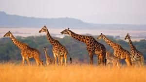 Wild 24: Africa's Savananh photo
