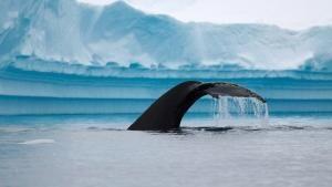 Wild Antarctica photo