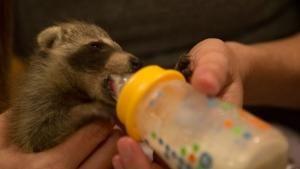 Wildlife Rehab photo