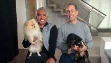 Hunde Rehab Program