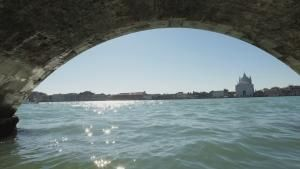 Wild Venice photo