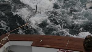 سمكة التونة العنيدة: الشمال vs. الجنوب صورة