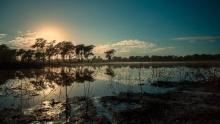Africa's Wild Kingdom Reborn show